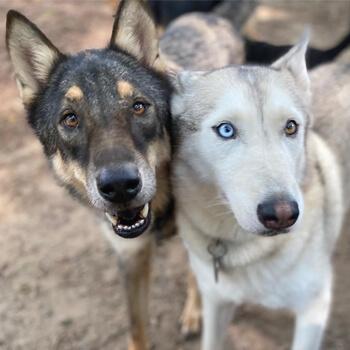 Maia and Layla