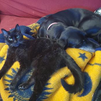 Ni and Domino
