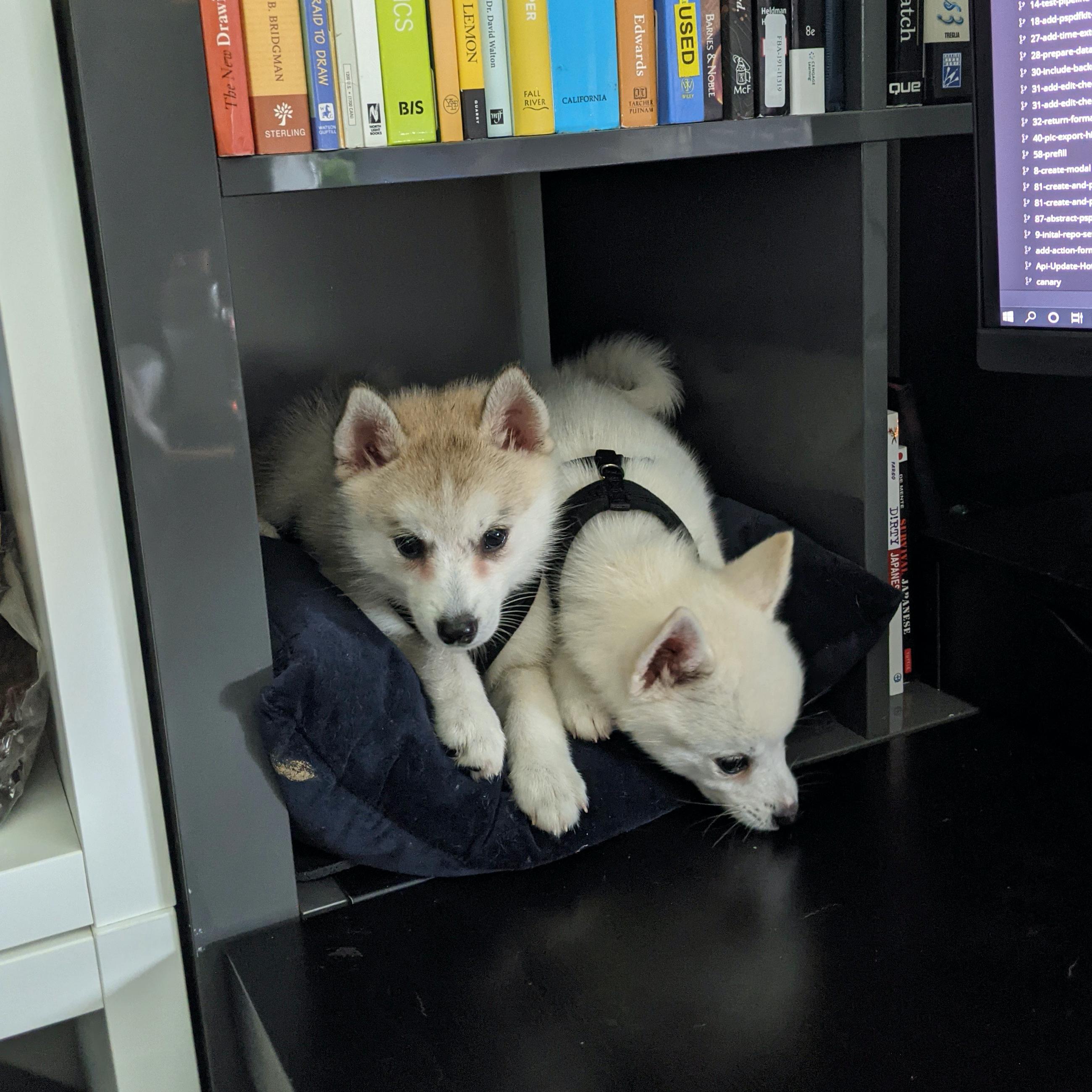 Sasha and Sissy